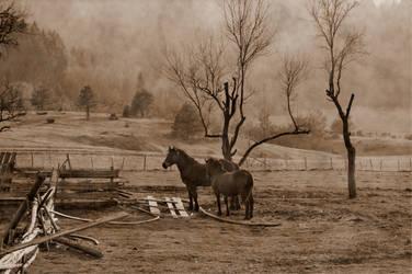 horses sepia by zazoon
