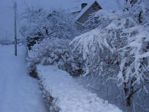 Winter morning in Estonia