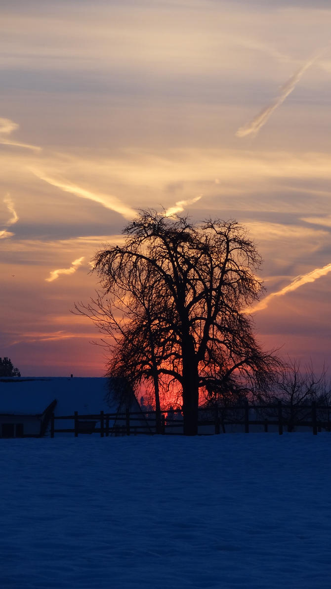 Sunset Tree by Narmita08
