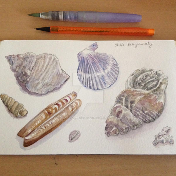 Watercolour study of shells by SuzanneHole