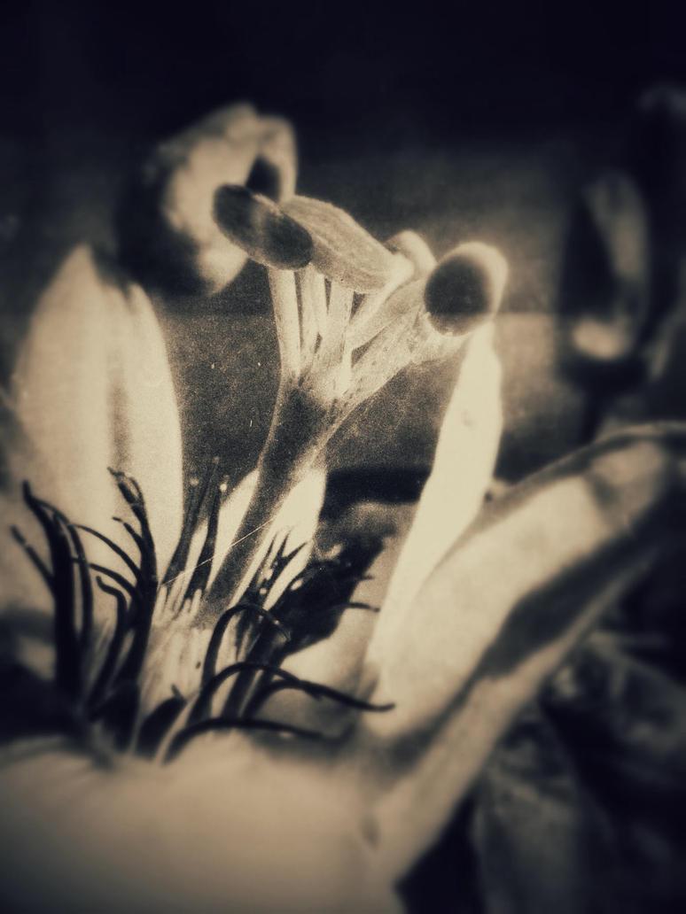 Flower rework. by Geoperno