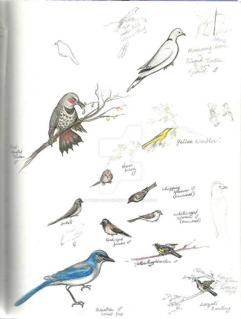 Bird Sketches by Weird-Dreams-Ink