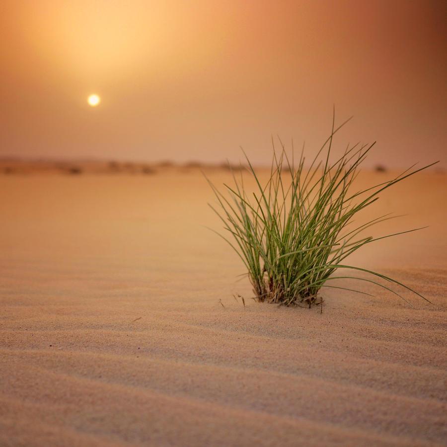 Arabian Desert by IsacGoulart