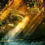 Radiance by IsacGoulart
