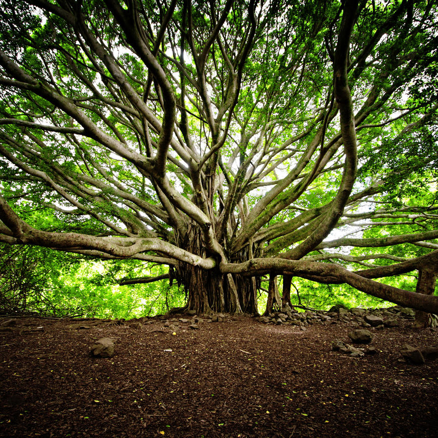 18 Of The Most Beautiful Trees in the World - BlazePress