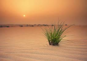 Arabian Desert II