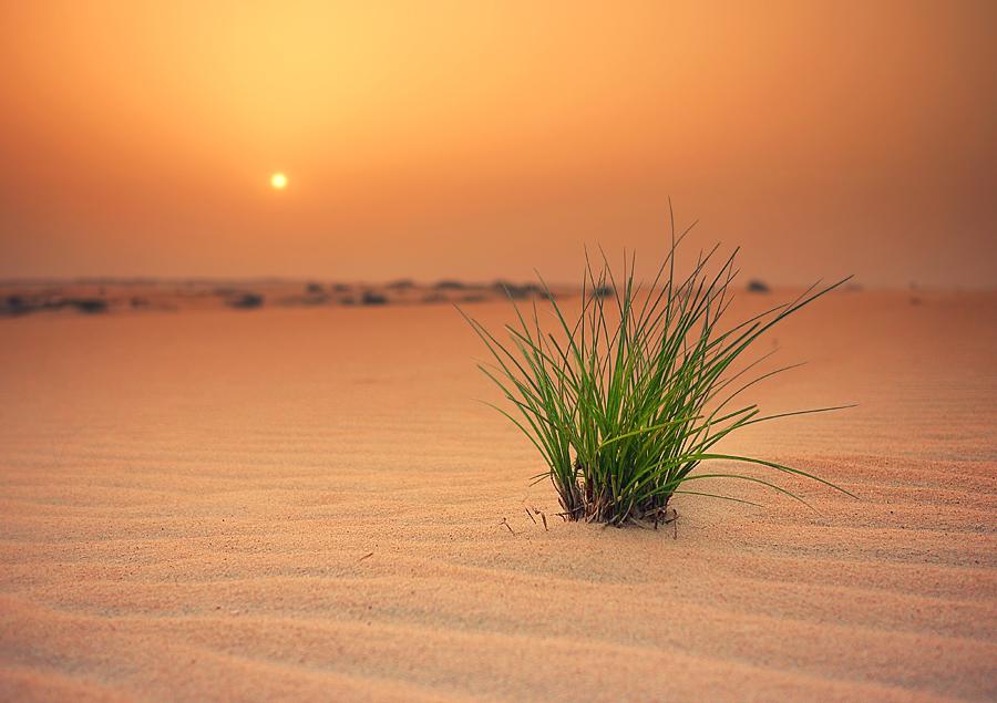 Arabian Desert II by IsacGoulart