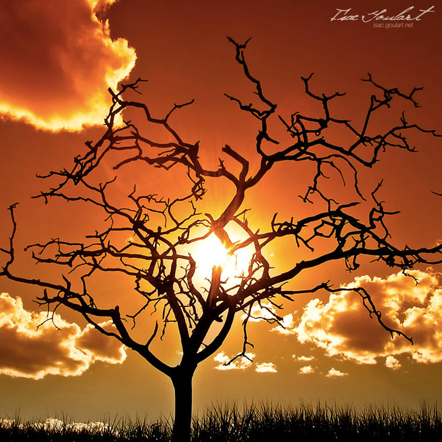 Desolate II by IsacGoulart