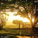 The Afternoon Rain II