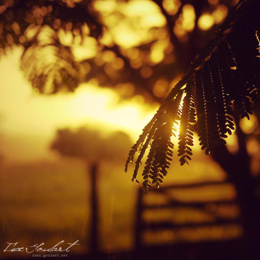 Rainy Sunset by IsacGoulart