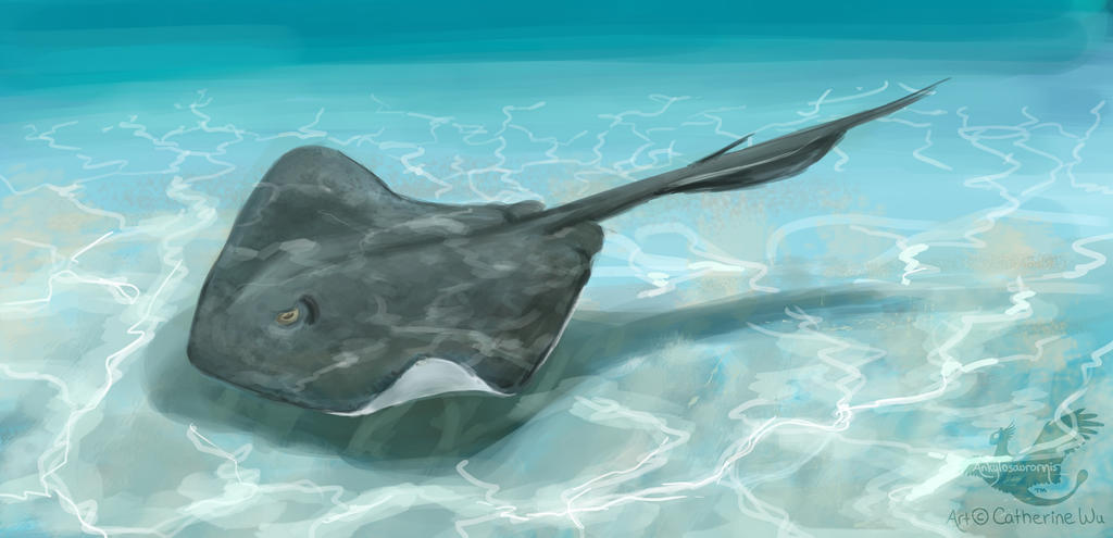 Southern Stingray By Ankyloce On Deviantart