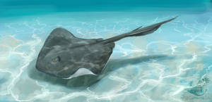 Southern Stingray by Ankyloce