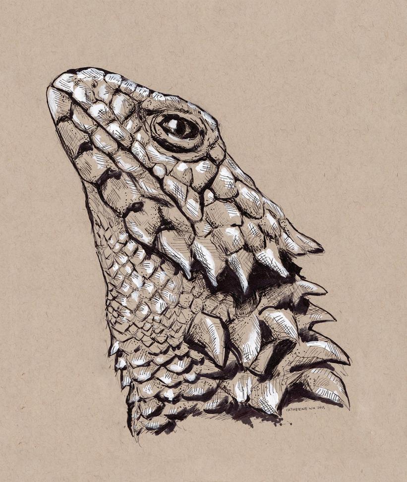 Armadillo lizard wallpaper - photo#15
