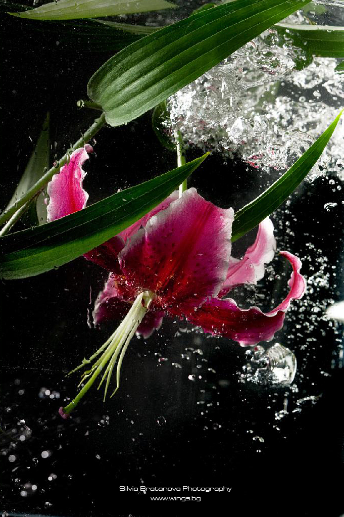 flower sensuality_03 by SOOO