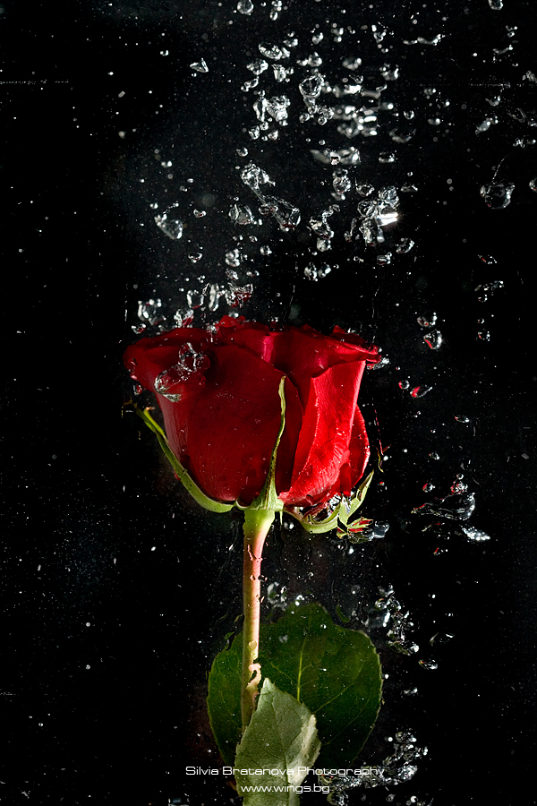 flower sensuality_04 by SOOO