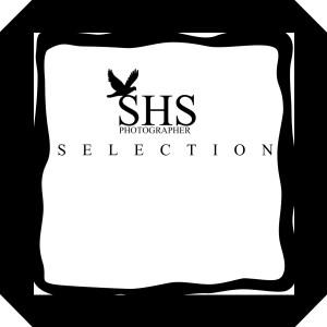 shsp's Profile Picture