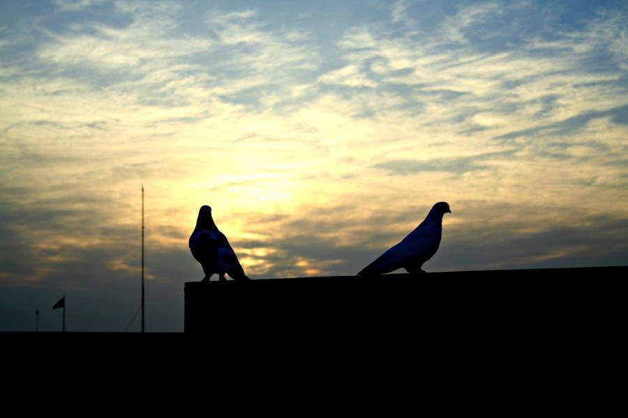 Birds by AzheenFuad