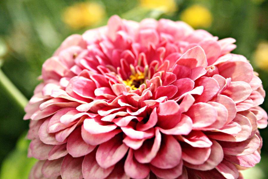 flower by azheenfuad on deviantart, Beautiful flower