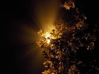 warm Treelight by wildelbenreiter
