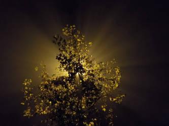 green Treelight by wildelbenreiter