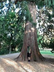 Unterm bayrischen Mammutbaum 1