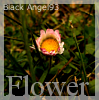 Flower Icon by 366Graphics