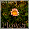 Flower Icon 2 by 366Graphics