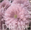 Dream in pink by 366Graphics