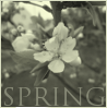 One spring by 366Graphics