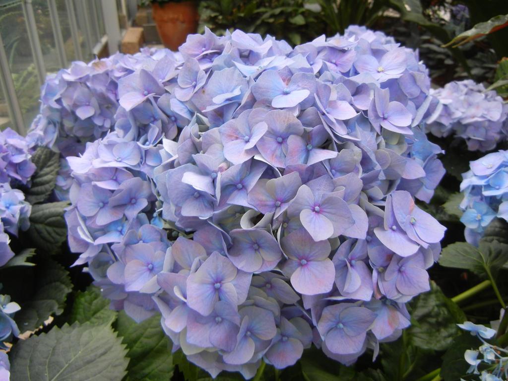 Light Purple Flowers By Flowerphantom On Deviantart