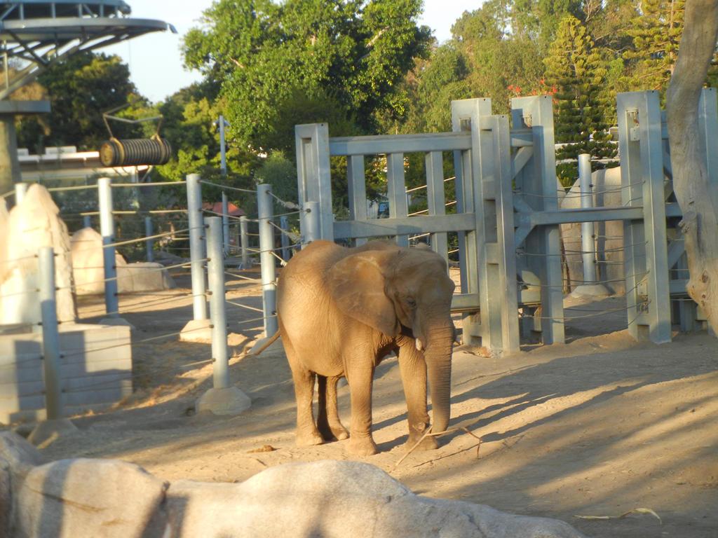 N F Elephant 2 Elephant Stands Alone ...