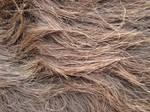 Fur Texture/Stock