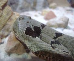 Heart Marked Snake