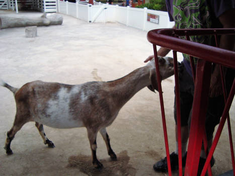 Goat Gets You