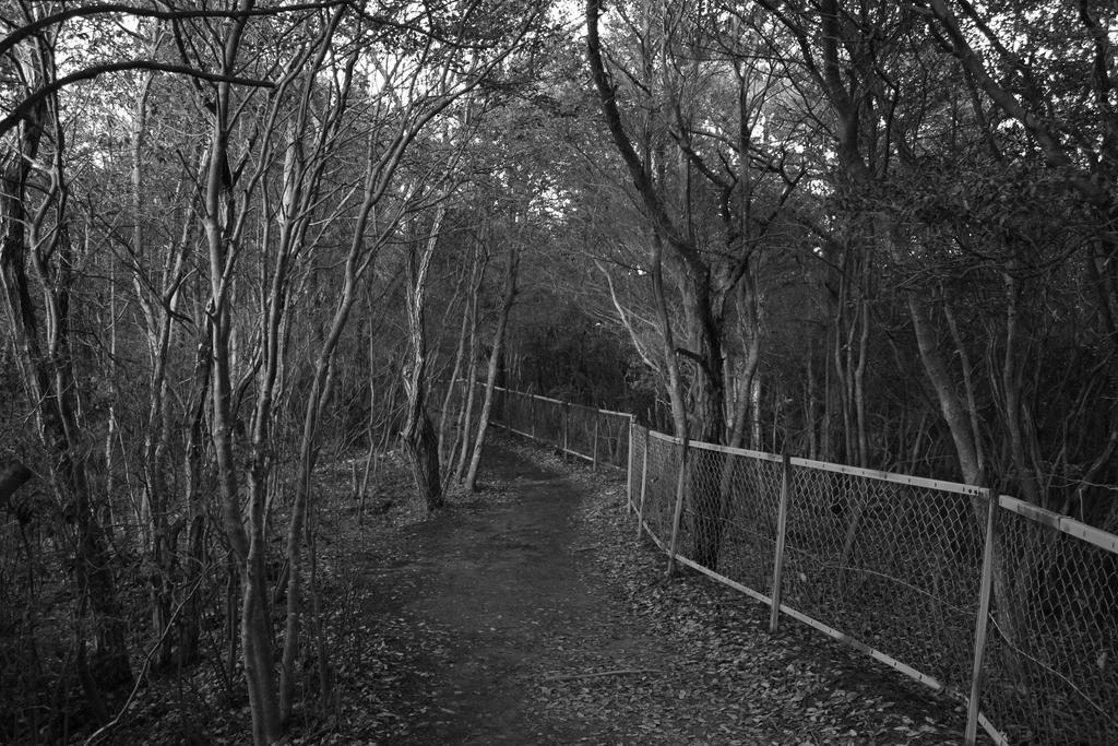old fence in black and white by rayna23