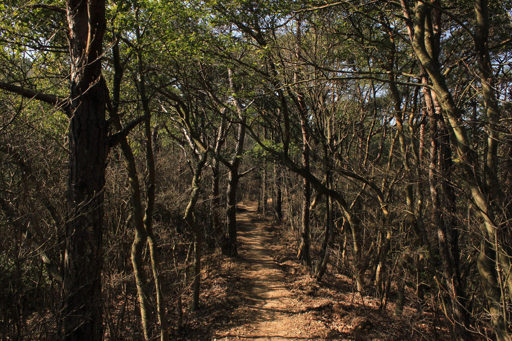 twisting forest by rayna23