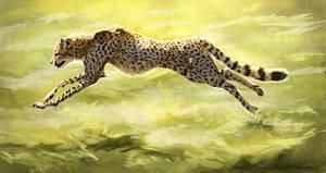 Cheetah Study #2