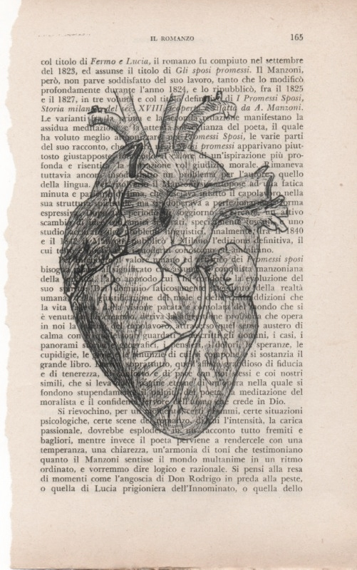 Heart by FradiMaggio