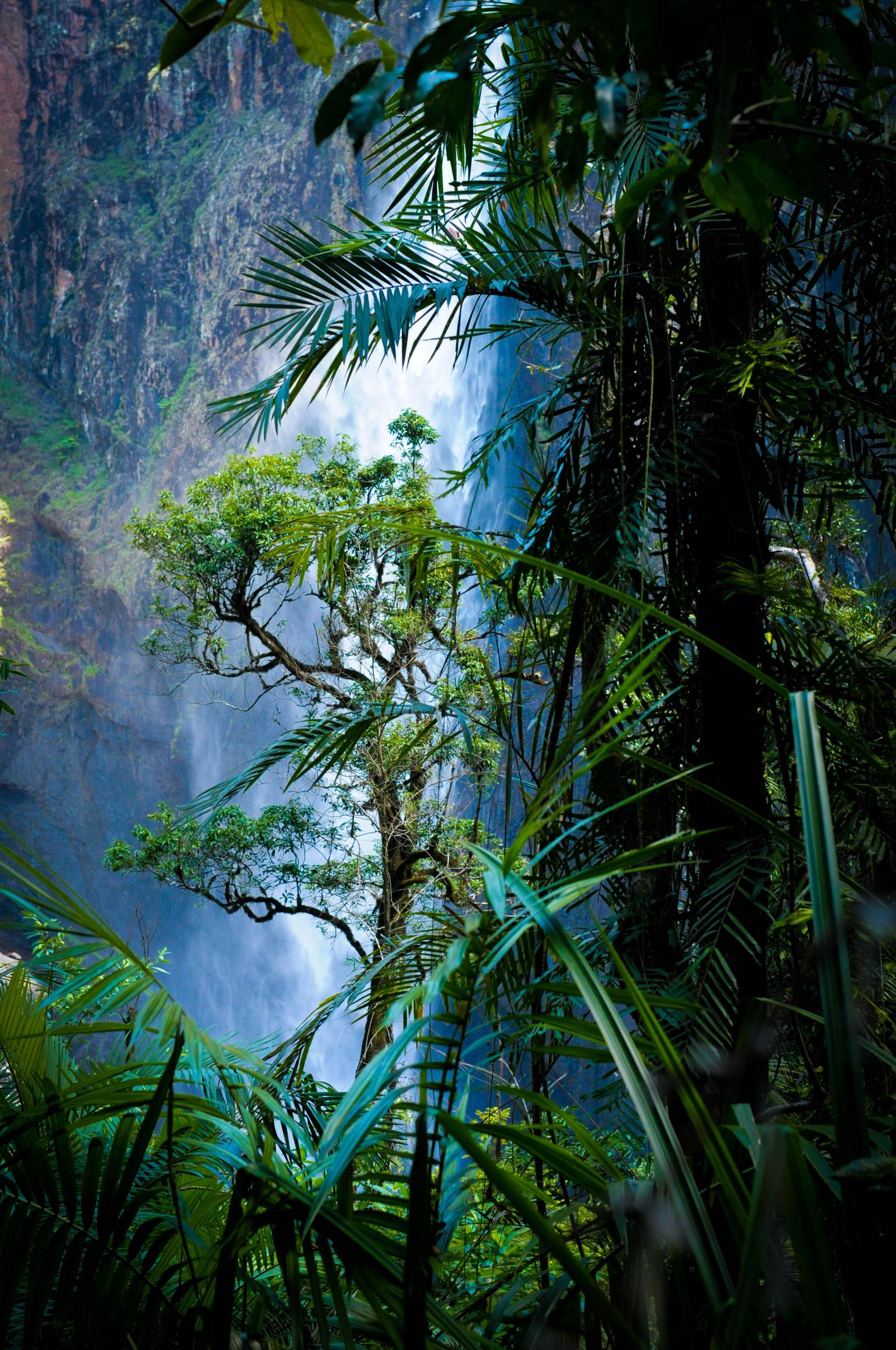 Australian Rain Forest by monojam