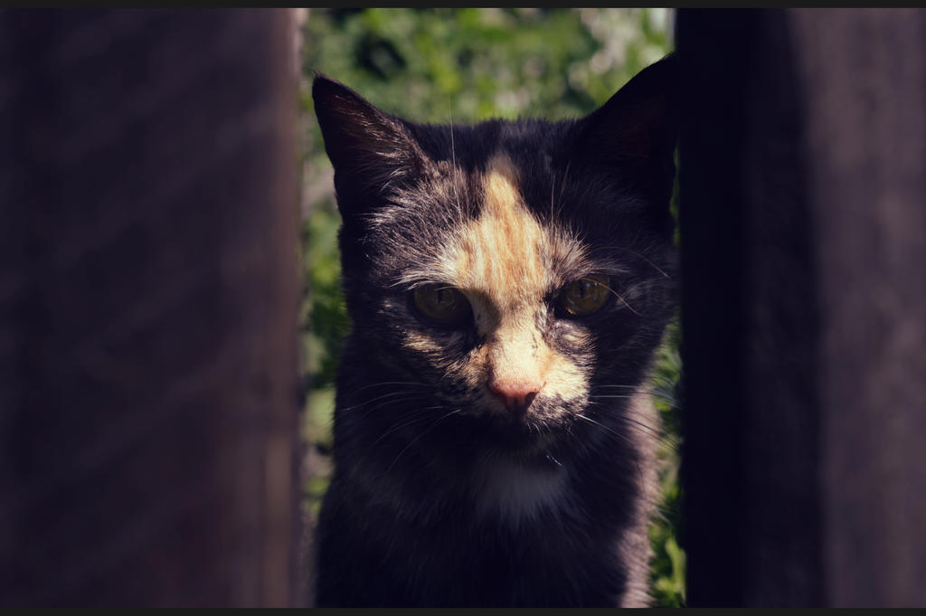 Cat by M44X