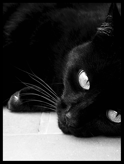 Black Beauty. Pt.1 by Lilou1984