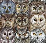 Owl Optics