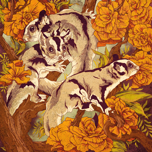 Sugar Gliders by Calmality