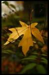 Leaf by malayleo
