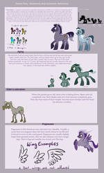 Forest Pony Specie Sheet#1 - Anathomy and Colors