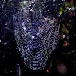 The intricate web of life ...