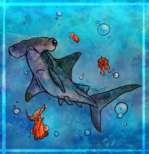 Sharky Fish