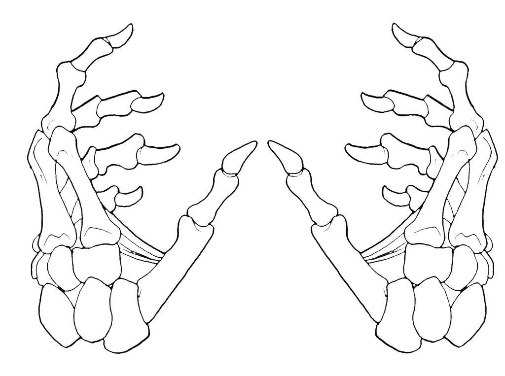 D Line Drawing Hand : Skeleton hands by krazykavumaster on deviantart