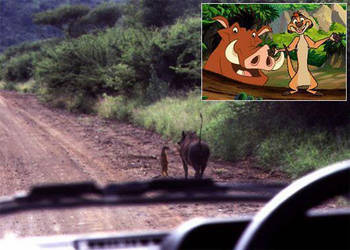 Pumba and timon from The Line King