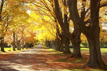 Autumn by Girolamo